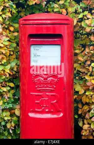 Bright Red British Post Box in Autumn, Hartford, Cheshire, England, UK - Stock Photo