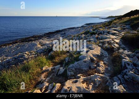 Coast in the evening light, Cape Kamenjak, Premantura, Istria, Croatia - Stock Photo