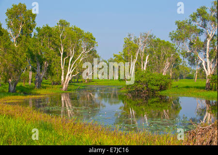 Trees along a river, Kakadu National Park, Northern Territory, Australia - Stock Photo