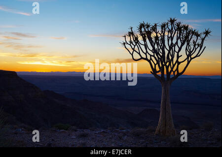 Africa, blue hour, cliff, Fish River, quiver tree, Namibia, sunrise, tree, - Stock Photo