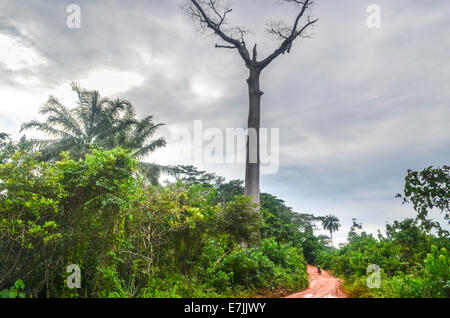 A cyclist on a muddy red earth dirt road between Liberia and Cote d'Ivoire (Ivory Coast) in West Africa - Stock Photo