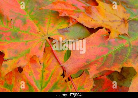 Autumn leaves on the floor - Stock Photo
