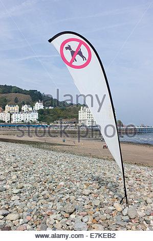 Flag sign indicating 'no dogs' on Llandudno beach, North Wales, UK - Stock Photo