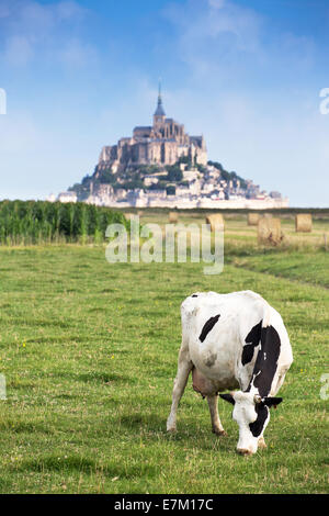 Mont Saint Michel bay listed as UNESCO World Heritage, cow in pasture and Mont Saint Michel in the background - Stock Photo