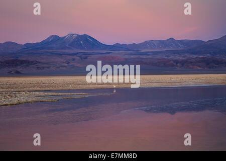 Chile, El Norte Grande, Region de Antofagasta, Salar de Atacama, Laguna Chaxa - Stock Photo