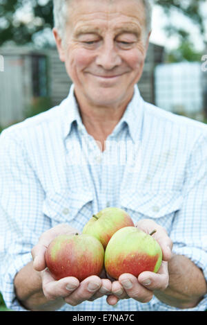 Senior Man On Allotment Holding Freshly Picked Apples - Stock Photo