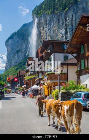 canton Berne, Bernese Oberland, waterfall, Lauterbrunnen, Switzerland, Europe, village, colourful, cows, landscape, - Stock Photo