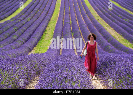 Europe, France, Provence-Alpes-Côte d'Azur, Provence, Valensole, Lavender, woman, lady, red, dress - Stock Photo