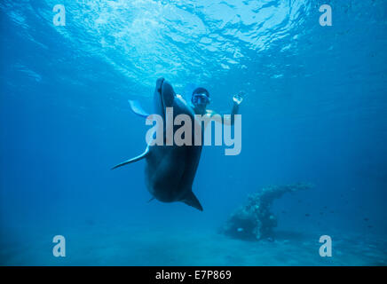 Child interacts with juvenile bottlenose dolphin (Tursiops truncatus). Dolphin reef, Eilat, Israel, Red Sea - Stock Photo