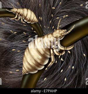 Lice in hair problem as a medical concept with a macro close up of a human head with an infestation of parasitic - Stock Photo