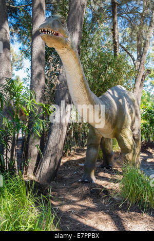 Life size Apatosaurus dinosaur figures prowl the forest - Stock Photo