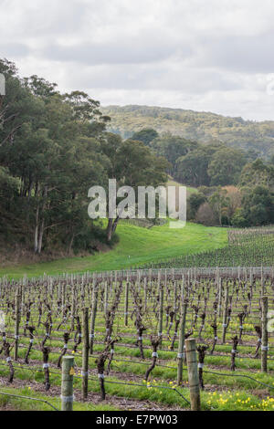 Winter in the vineyards of picturesque Adelaide Hills - Stock Photo