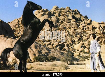 The Black Stallion Returns Year : 1983 USA Director : Robert Dalva Kelly Reno - Stock Photo