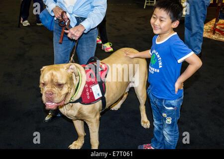 Miami Beach Florida service dog Asian boy bulldog - Stock Photo