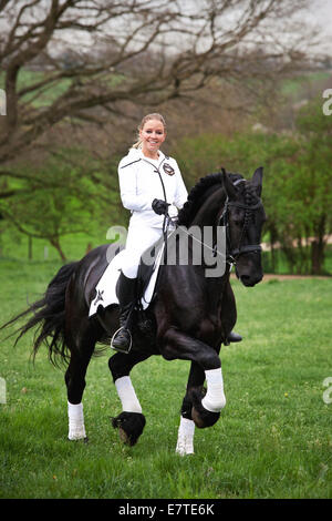 Friesian or Frisian horse, stallion, trotting with female rider on horseback, on a meadow, classical dressage - Stock Photo