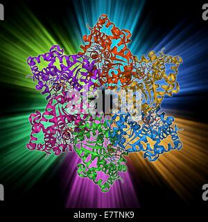 DNA helicase. Molecular model of a helicase molecule from the SV40 virus. Helicases are enzymes that separate the - Stock Photo
