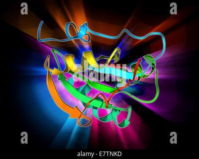 Simian virus (SV40) large T antigen, molecular model. This antigen is from the simian vacuolating virus 40 (SV40). - Stock Photo