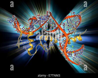 Transcription factor and ribosomal RNA (rRNA). Molecular model showing the 6 zinc fingers of transcription factor - Stock Photo