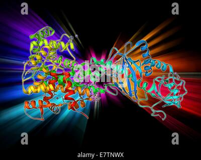 RNA interference protein, molecular model. This RNA interference protein is also known as dicer. It is an RNAase - Stock Photo