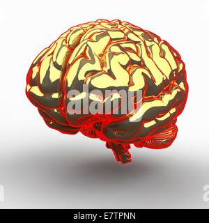 Human brain, computer artwork. - Stock Photo