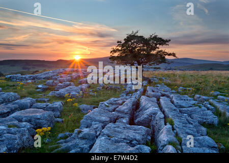 Lone Tree and Limestone Pavement at Sunset Winskill Stones Ribblesdale Yorkshire Dales England
