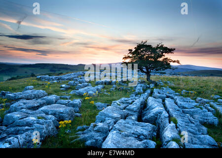 Lone Tree and Limestone Pavement at Dusk Winskill Stones Ribblesdale Yorkshire Dales England