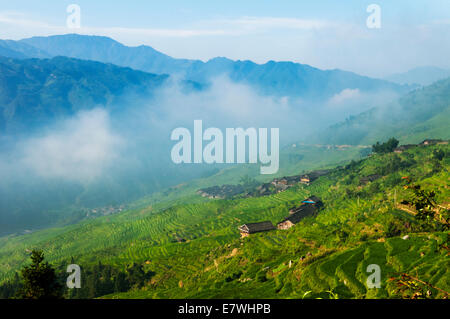 The Longsheng Rice Terraces, also called the Longji Rice Terraces, - Stock Photo