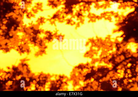 Vivid abstract orange and brown pattern, shape, background - Stock Photo