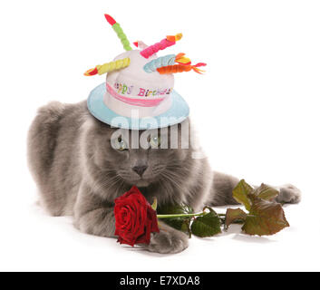 cat with rose and birthday hat cutout - Stock Photo