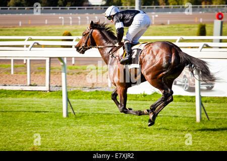 Rome, Italy, 01 May, 2014: Jockey rides horse during race one. - Stock Photo