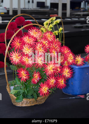 Malvern, Worcestershire, UK 26th September 2014.  Malvern Autumn show prepares to welcome visitors Saturday and - Stock Photo