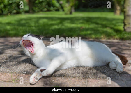 Lazy black and white cat sleeping in a garden - Stock Photo