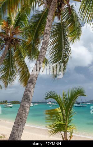 Palm trees along the shore of Cruz Bay in St. John, U.S. Virgin Islands. - Stock Photo