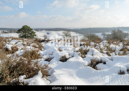 Sunny day looking out over snow on these heathland hills in Holland. - Stock Photo
