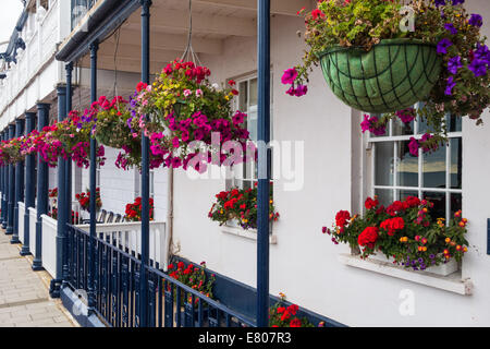 Sidmouth, Devon, England. Hanging baskets of flowering pink and white petunias outside a sea front house in Sidmouth. - Stock Photo