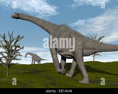 Brachiosaurus dinosaurs walking in an open field. - Stock Photo