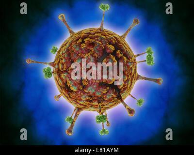 Microscopic view of Henipavirus. Henipavirus is a established group of paramyxoviruses comprising the Hendra virus, - Stock Photo
