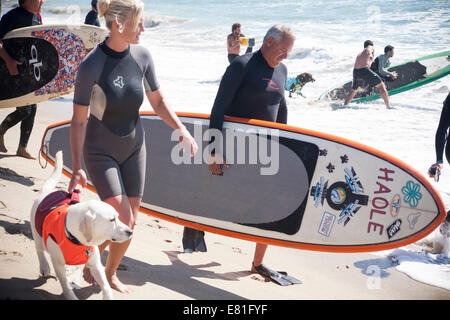 Huntington Beach, CA, USA. 28th September, 2014. Dog teams walk out to the water at Surf City Surf Dog™ annual canine - Stock Photo