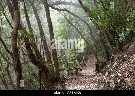 Hiking trail in the laurel forest of the Los Tilos Biosphere Reserve, near Los Sauces, La Palma, Canary Islands, - Stock Photo