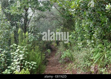 Hiking trail in Los Tilos Biosphere Reserve laurel forest near Los Sauces, La Palma, Canary Islands, Spain - Stock Photo
