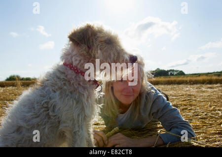 A small dog sitting and looking into the distance. A woman beside him on the group. Harvest. - Stock Photo