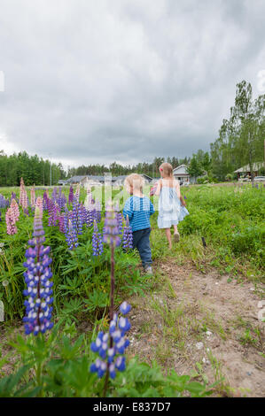 Kids picking flowers by road side (lupinus polyphyllus, non-native invasive species) - Stock Photo