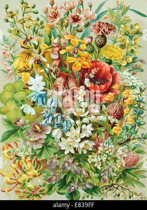 Lithograph lithographic litho print of English wild flowers circa 1885 - Stock Photo