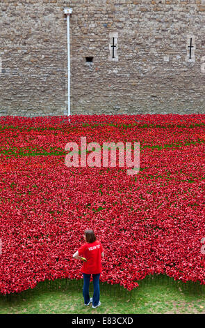 LONDON, UNITED KINGDOM - SEPT 28TH 2014: A Volunteer helping set up the 'Blood Swept Lands and Seas of Red' Ceramic - Stock Photo