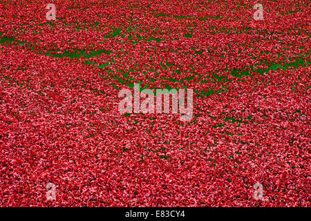 The ceramic Poppies of the 'Blood Swept Lands and Seas of Red' installation at the Tower of London.  The installation - Stock Photo