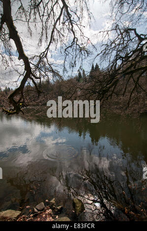 The lower loch, Bowhill, Selkirk - Stock Photo