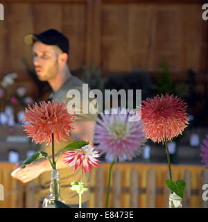 Old Bethpage, New York, USA. 28th Sep, 2014. At the Dahlia flower category table, a young man looks at entries of - Stock Photo