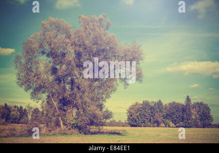 Vintage picture of autumn field with trees, retro filtered. - Stock Photo