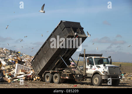 Truck dumping garbage in active landfill cell at Shepard Waste Management Facility. - Stock Photo