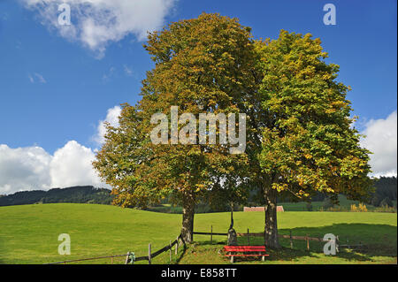 Two Large-leaved Lindens or Large-leaved Limes (Tilia platyphyllos) with autumn foliage, with a crucifix and a red - Stock Photo